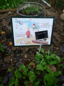 A bucket full of weeding, 'waste not, want not' signage from a wartime children's book and Spinach beet from the Newquay Zoo wartime zoo keepers' garden.