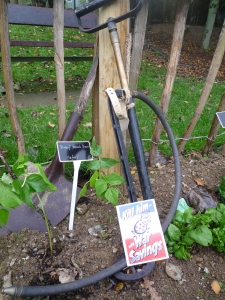 Squander bug and original 1939 stirrup pump in Newquay Zoo's wartime zoo keeper's garden ( with lovely dwarf French beans 'safari' variety)
