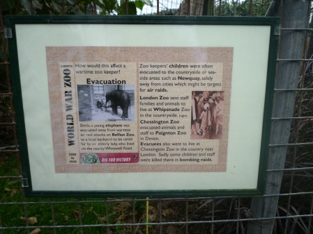 One of our temporary World War Zoo Gardens trail boards set up for schools workshops, World War Zoo Gardens workshop, Newquay Zoo