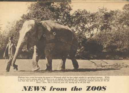 Whipsnade elephants ploughing for victory (Animal and Zoo magazine Sept.1940)