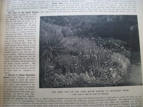 The Fate of The South Border, Gertrude Jekyll, January 20, 1917, The Garden magazine