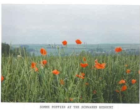 Somme poppies, Schwaben Redoubt area of the First World War battlefields in France taken on my first trenches tour,  1992 (Copyright: Mark Norris)