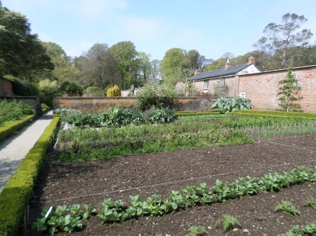 Walled kitchen gardens, Trengwainton, Cornwall, May 2014.  Image: Mark Norris, WWZG,