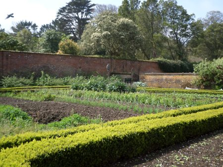 The main walled kitchen gardens at Trengwainton, Cornwall, May 2014 Image: Mark Norris: WWZG.