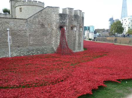 Tower Hill Poppies Oct 2014