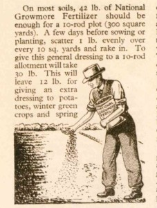 Maybe gloves should be worn today ... How to dress to scatter National Growmore Fertiliser illustration from the January 1945 Min of Ag Allotment Guide.