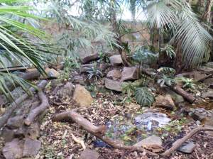 Part of our Tropical House at Newquay Zoo.