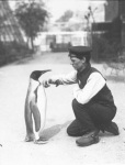 Harry Munro, the now named 'Keeper with King Penguin 1914' (as described on a recent London Zoo postcard I was given) Copyright ZSL / London Zoo/ F.W. Bond