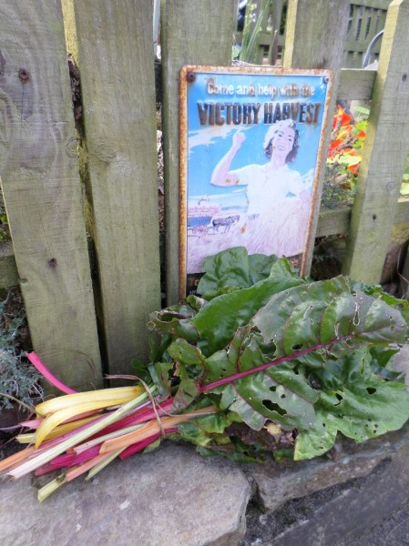 A colourful bundle of Chard in our 'Victory' Harvest 70 years on, Newquay Zoo, 2015 (Image: Mark Norris)