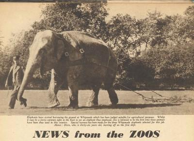 whipsnade-elephant