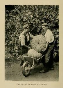 childrengardens00jeky_0058 pumpkin