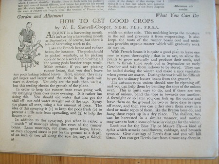 trelawney-garden-centre-and-bop-wartime-garden-blog-0810-001