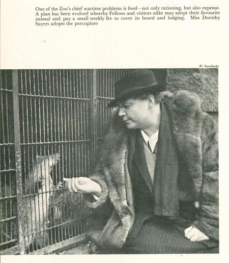 p78 Sayers adopt porcupine