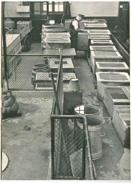 p80 fish tortoise house